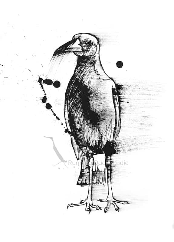 Running Duck Studio Ink Gallery - black and white wildlife artwork of a Magpie