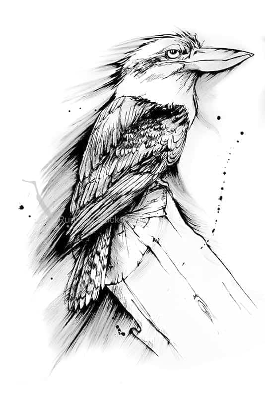 Running Duck Studio Ink Gallery - Black and white artwork of a Kookaburra